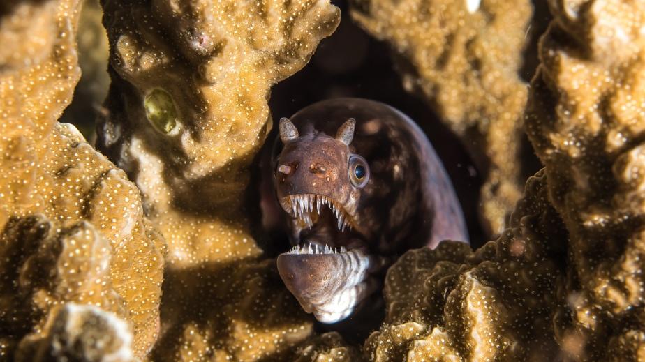 bilikiki-bay-shadowy-eel