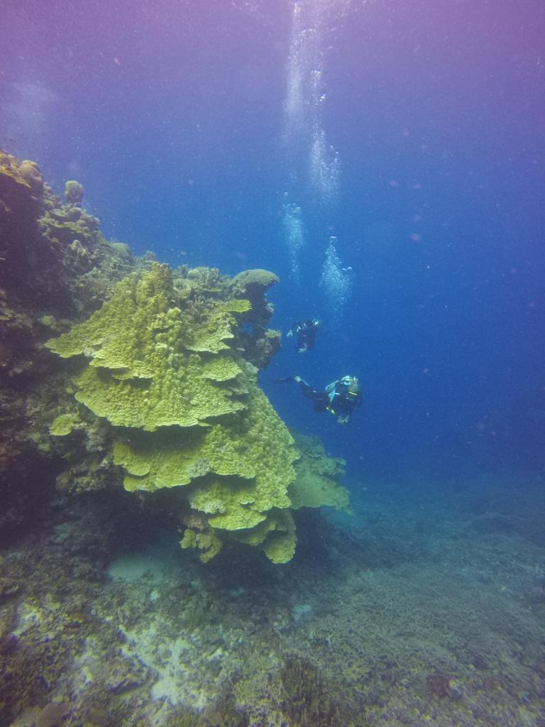 large-coralhead-plus-divers